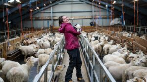 5 things I learned while helping out with lambing in South Greenland