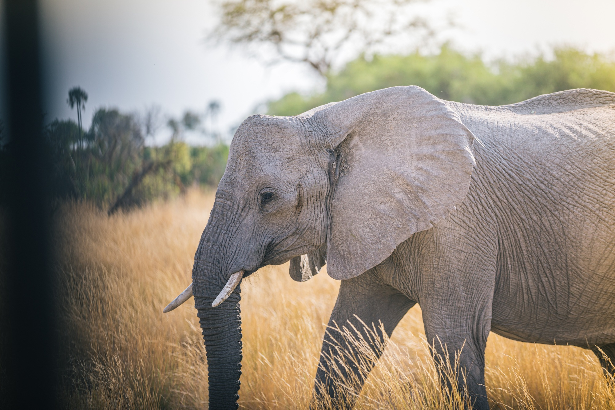 Moving Giants: the story of translocating 200 elephants across Africa
