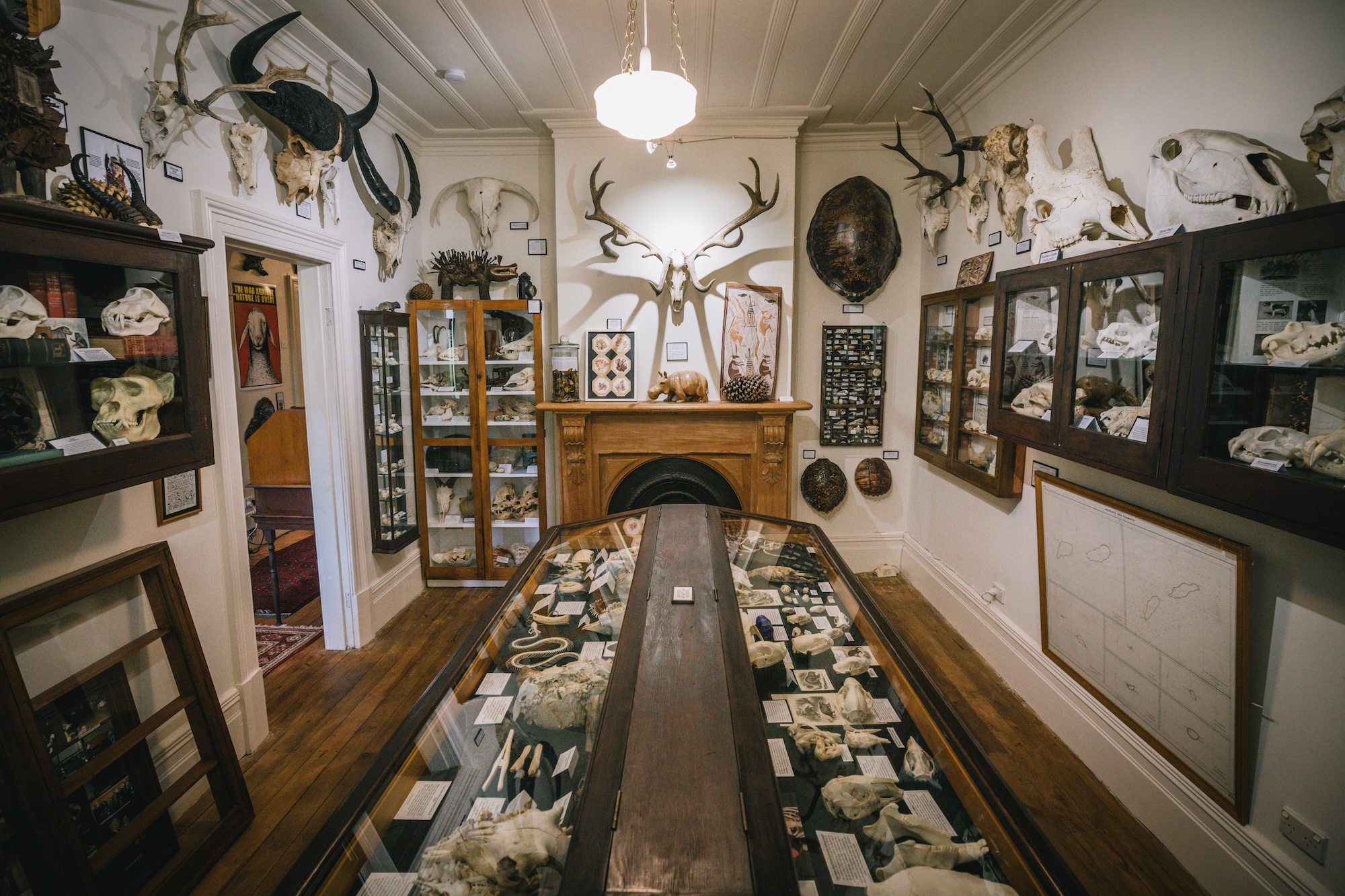 New Zealand's quirkiest museum is full of mystery (and bones)